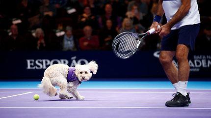 Žaismingi pagalbininkai – teniso kamuoliukus padavinėjo šunys