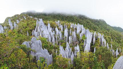 Borneo – egzotiška sala, kurią dalijasi net trys valstybės