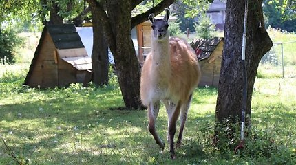 Gyvūnai Alytaus rajone