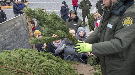 """Miškininkai nemokamai dalino eglės šakas – prasidėjo akcija """"Parsinešk Kalėdas į savo namus"""""""