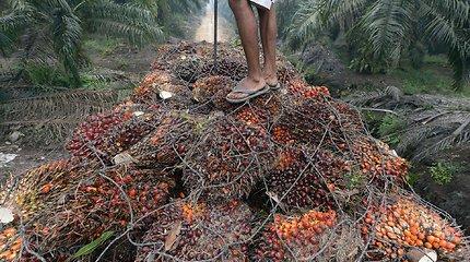 Palmių aliejaus kaina pasiekė aukščiausią per trejus metus lygį