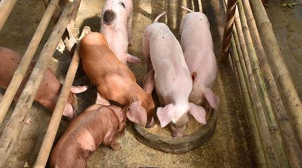 Slovakijoje užregistruotas pirmas afrikinio kiaulių maro atvejis