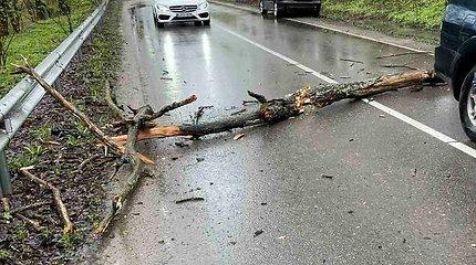 Ant važiuojančio kauniečio automobilio užkrito medis