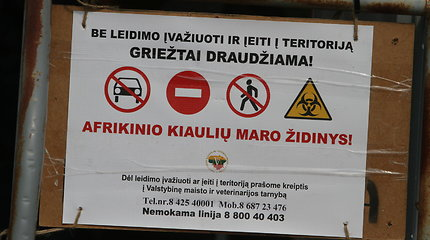 Trijų savivaldybių ūkiuose – afrikinio kiaulių maro protrūkiai