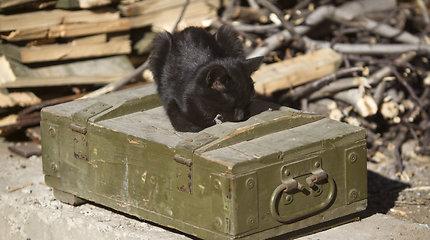 """Fizikai sugalvojo, kaip """"išgelbėti"""" Schrödingerio katiną"""