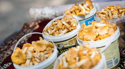 Pirmųjų voveraičių kaina pirkėjų nedžiugina: už kilogramą prašo 10 eurų