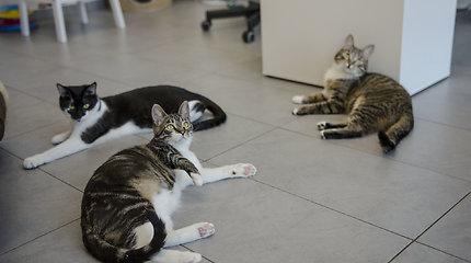 """""""Naminukų kačių namai"""" – oazė, kurioje jūsų laukia naujas augintinis"""