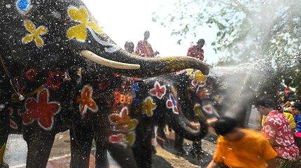 Vandens mūšis su drambliais – Tailande prasidėjo Naujųjų metų šventė