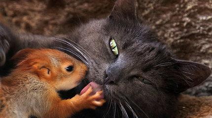 Krymo pusiasalyje našlaičiais likę voveriukai prieglobstį rado katės glėbyje