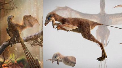 Mokslininkus apstulbino retos fosilijos paslaptys – rasta nauja smulkaus, bet nuožmaus dinozauro rūšis