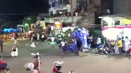 Užfiksuota dramatiška akimirka, kai įsisiautėję drambliai įbėgo į žmonių minią