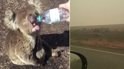 Širdį veriantys vaizdai iš Australijos patvirtina katastrofišką realybę: pakelę nuklojo šimtai pražuvusių gyvūnų