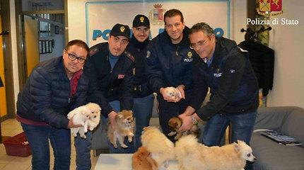 Italijos policija išgelbėjo šešis pavogtus pomeranijos špico šuniukus