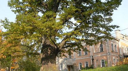 Įspūdingiausi Lietuvos medžiai