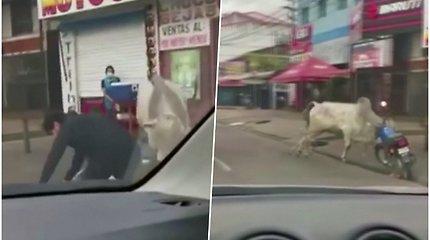 Pabėgusios karvės siautėjo miesto gatvėse – sužeisti mažiausiai 4 žmonės