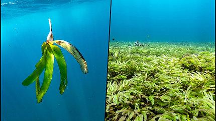 Indijos vandenyne užfiksuoti vaizdai nustebino mokslininkus – aptiko didžiausią pasaulyje jūros žolių pievą