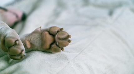 VMVT: Marijampolėje aptikta nelegaliai veistų gyvūnų