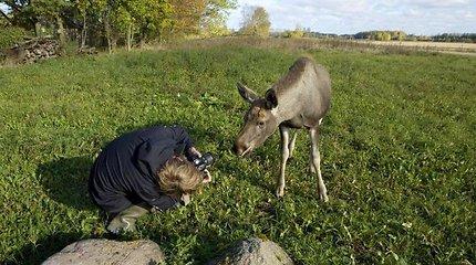 Nepatirtos rudens pramogos: žygiai kalnais, rožių laukais ir gyvūnų pėdsakais