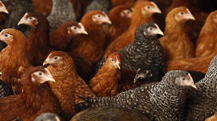 Dar vienas paukščių gripo protrūkis Lenkijoje