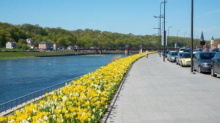 Kaunas pasirūpino ryškiu fonu asmenukėms: kiek miestui kainuoja gėlių oazės ir ar nedomina jos vagių?