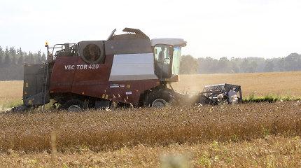 Grūdų perdirbėjų asociacija: gausiam derliui supirkti reikia 1,5 mlrd. eurų
