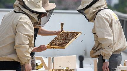 Šiemet laukiama rekordinio medaus derliaus