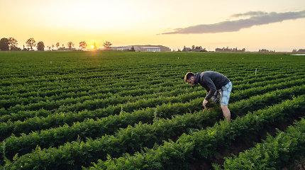 """Ūkininkas Darius Morkūnas: """"Mūsų prioritetas – šviežumas"""""""
