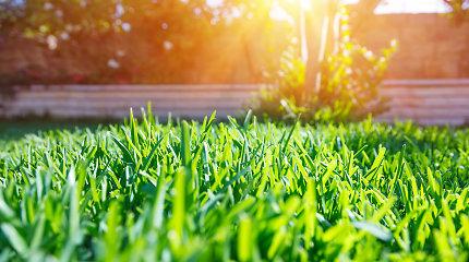 Prie namo tiesiame žalią kilimą: grožis be aukų, bet teks paplušėti