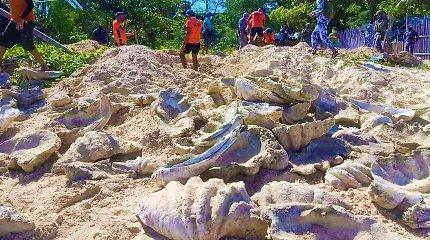 Filipinuose per reidą konfiskuota 3,3 mln. dolerių vertės moliuskų kriauklių