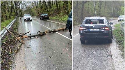 """Ant važiuojančios kauniečio """"Škodos"""" nuvirto medis: """"Bumptelėjo taip, kad net priekis pakilo – toje gatvėje pavojinga"""""""