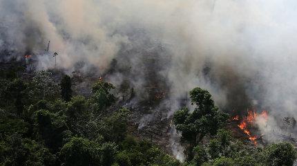 Gaisrai Amazonėje paveikė iki 85 proc. nykstančių rūšių