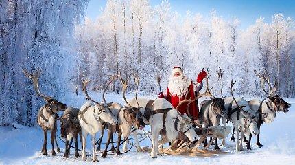 Kalėdų Senelio orlaivis – kiek elnių iš tikrųjų tempia jo roges?