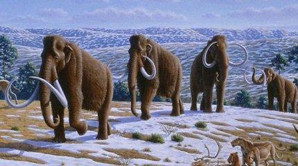 Japonijos mokslininkai trumpam atgaivino užšalusių mamutų ląstelių dalis