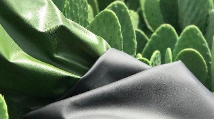 Meksikos startuolis sukūrė ekologišką odos pakaitalą iš kaktusų