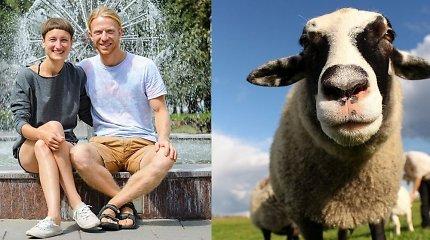 """""""Trys paršeliai"""" sodyboje – ožkos kaip šuniukai, sarginė karvė ir prieraišios vištos"""