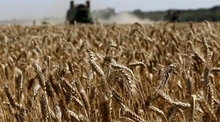 FNTT byla Šiaulių rajone: 6 tonos nelegalių derliaus apsaugos priemonių
