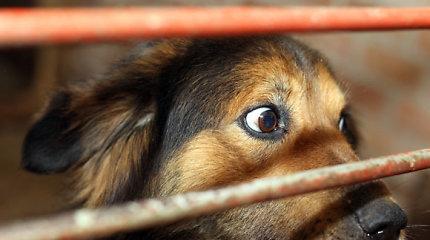 Klaipėdoje sudegė vagonėliai su beglobiais šunimis