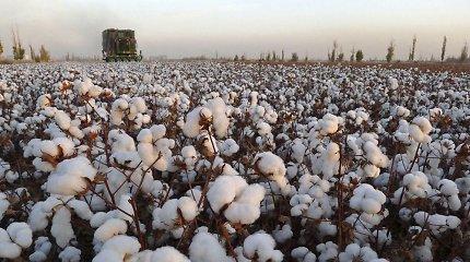 Kinija kai kurioms įmonėms leido be muitų įvežti JAV medvilnę, kukurūzus, sorgą, kiaulieną