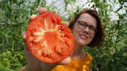 L.Liubertaitė apie 2021-ųjų pomidorų veisles: kas pasiteisino, o ko daugiau neaugintų?