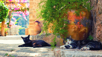 10 gražiausių miestelių Balearų salose, kurie pavergs jaukumu