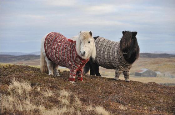 VisitScotland nuotr./Atsinaujinusi Škotijos turistinė reklama - pasipuošę poniai