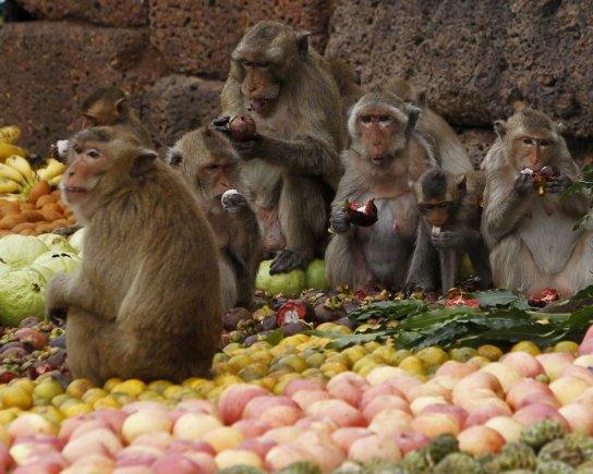 """""""Reuters""""/""""Scanpix"""" nuotr./Beždžionių šventė Tailande"""