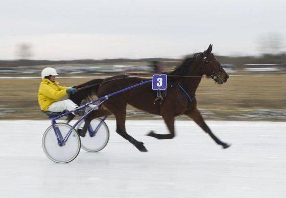Irmanto Gelūno/15min.lt nuotr./Dusetose vyksta tradicinės Sartų žirgų lenktynės.