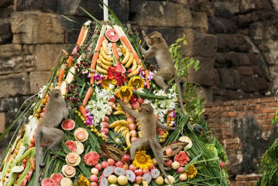 Beždžionių puota Tailande