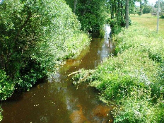 Nuotr. iš Wikipedia.org/Grūdos upė prie Darželių kaimo