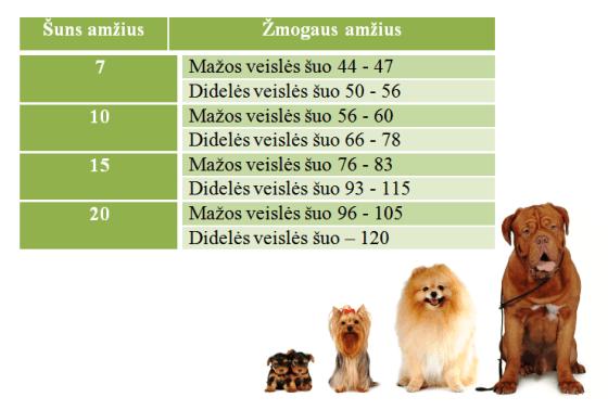 Šunų amžiaus lentelė