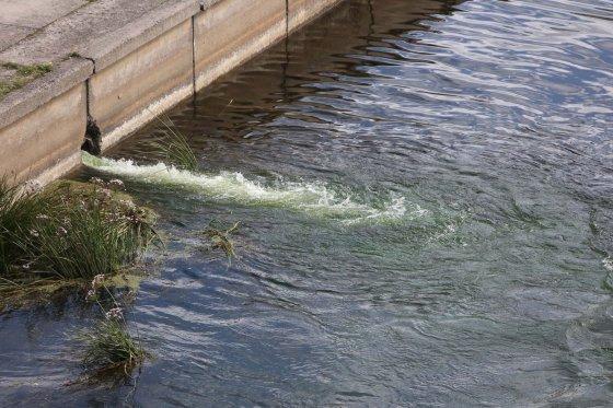 Juliaus Kalinsko/15min.lt nuotr./Į Nerį tekantis žalias vanduo