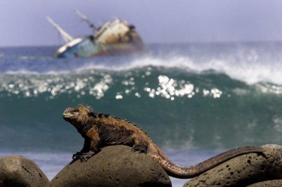 AP nuotr./Iguana Galapaguose