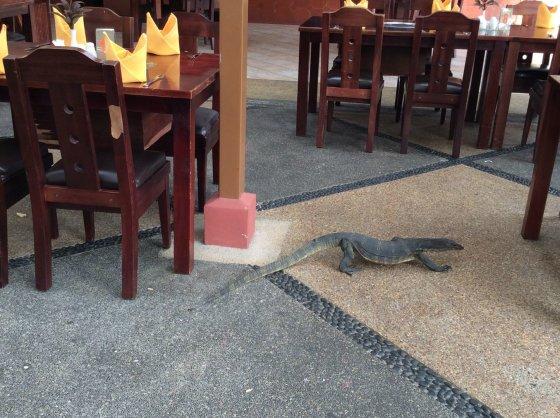 Sandros Voskaitės nuotr./Indonezija. Pusryčiai Bintan saloje.