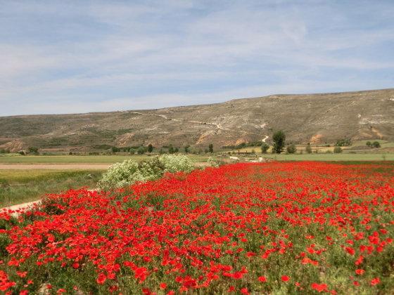 J. Aixner nuotr./Karščio dar neišdeginta šiaurės Ispanijos gamta